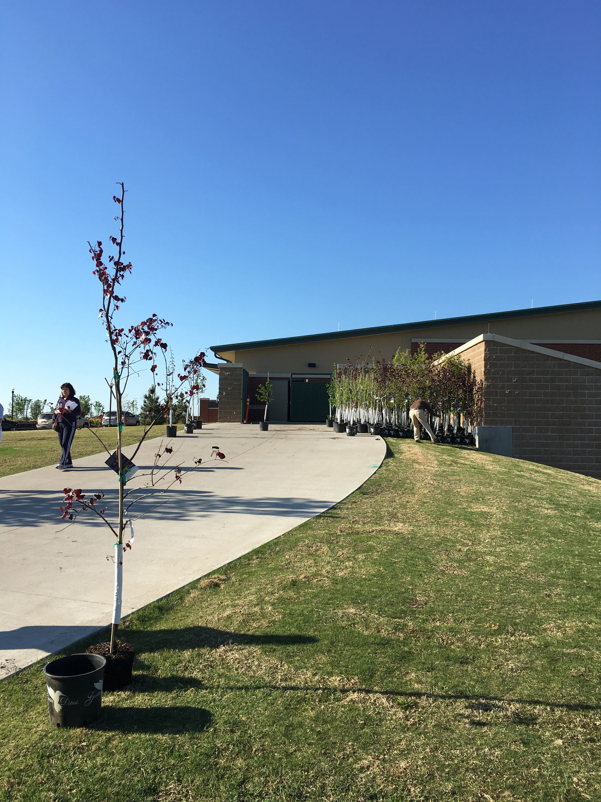 2016 Spring Tree Giveaway Trees