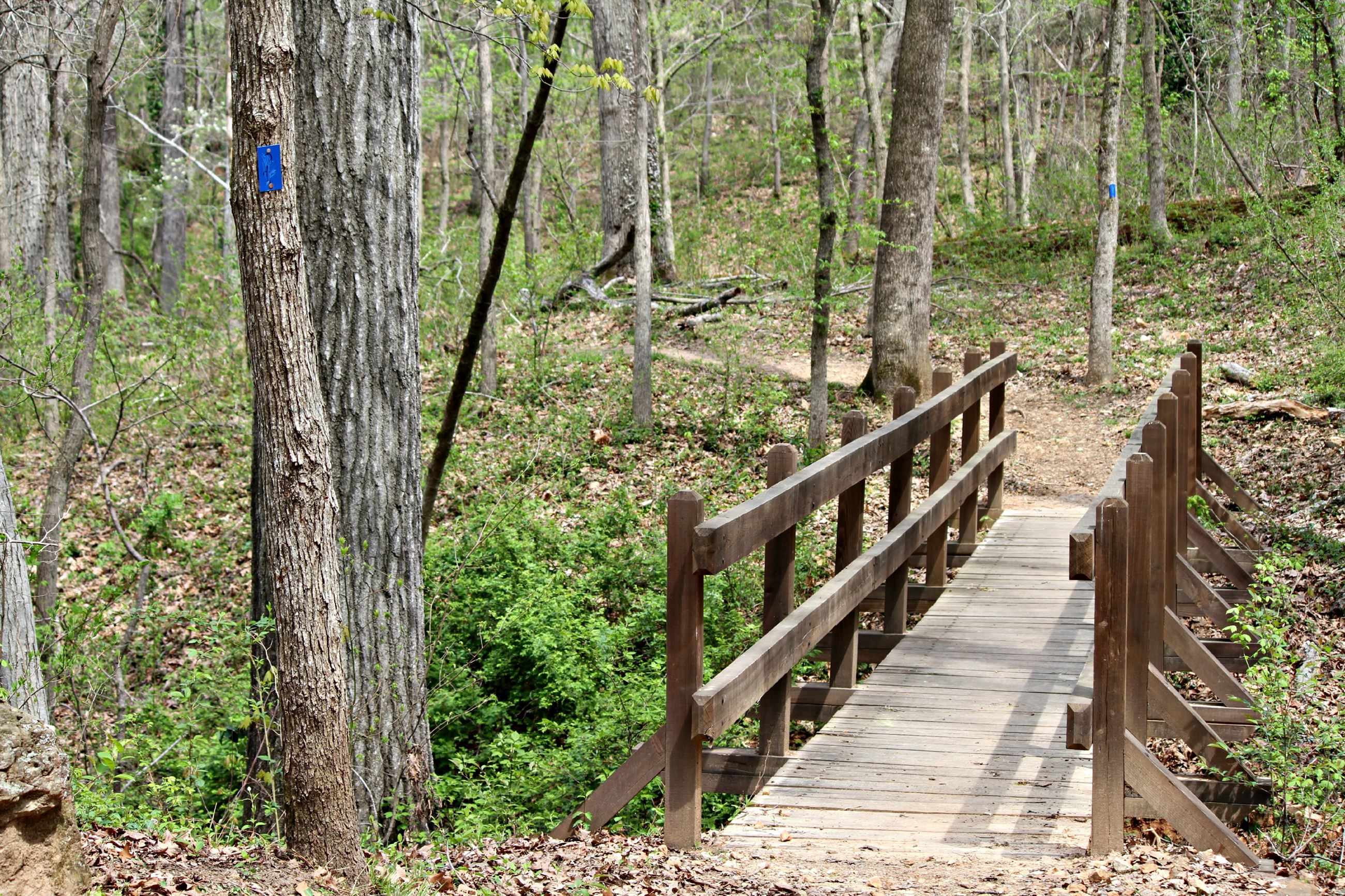 Image of a trail in the woods with a foot bridge